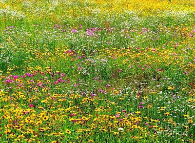 Photograph - Southern Springtime by Tim Townsend