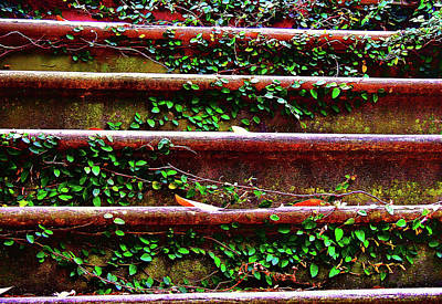 Southern Ivy Steps Art Print by JAMART Photography