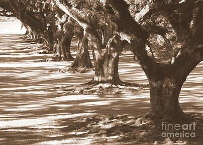 Southern Sunlight On Live Oaks Art Print by Carol Groenen