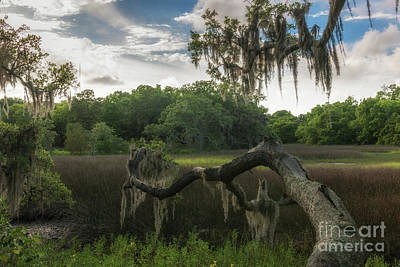 Photograph - Southern Sunshine  by Dale Powell