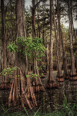 Louisiana Photograph - Southern Swamp 2 by Ester  Rogers