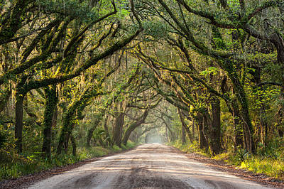 Southern Tree-lined Dirt Road Of Dreams Art Print