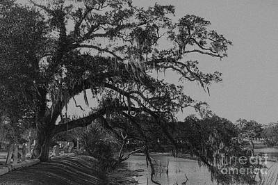 Photograph - Southern Tree Splendor And Glory by Dale Powell