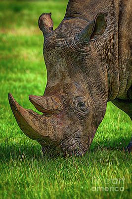 Photograph - Southern White Rhinoceros by Chris Thaxter