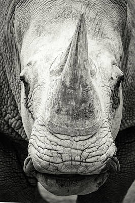 Photograph - Southern White Rhinoceros Closeup Black And White by Susan Schmitz
