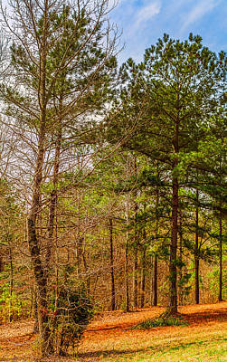 Photograph - Southern Woodlands - Vertical Landscape by Barry Jones