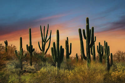 Phoenix Mixed Media - Southwest Sunset by Lori Deiter
