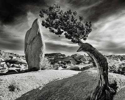 Mojave Desert Photograph - Sovereigns by Joseph Smith