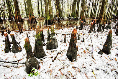 Photograph - Snow In The Swamps by Andy Crawford