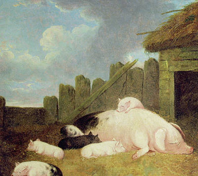 Suckling Painting - Sow With Piglets In The Sty  by John Frederick Herring Snr