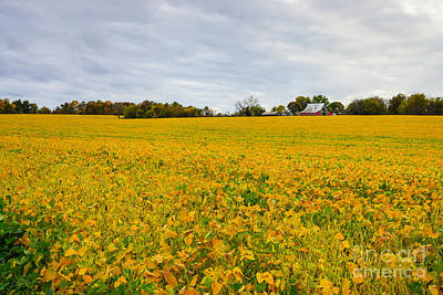 Photograph - Soybean Farm by Jennifer White
