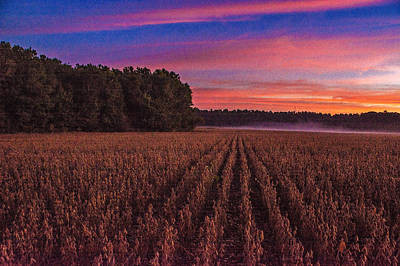 Photograph - Soybean Rows  by John Harding