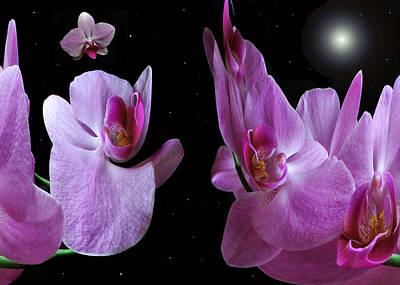Photograph - Space Station Orchid. by Terence Davis
