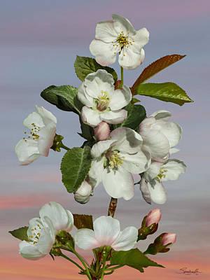 Digital Art - Spade's Apple Blossoms by IM Spadecaller
