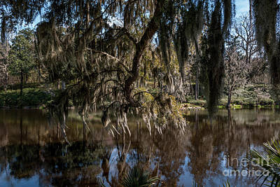 Photograph - Spainsh Moss Hanging Over Pond On Middleton Place by Dale Powell