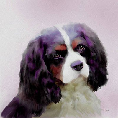Painting - Spaniel by Bamalam  Photography