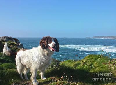 Cornwall Photograph - Spaniel Dog In Sennen Cove by Terri Waters