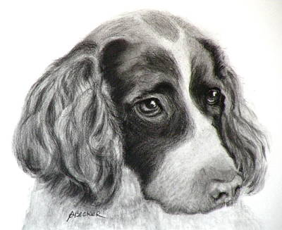 Painting - Spaniel Drawing by Susan A Becker