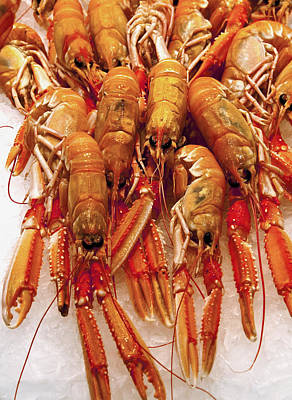 Photograph - Spanish Crayfish by Steven Sparks