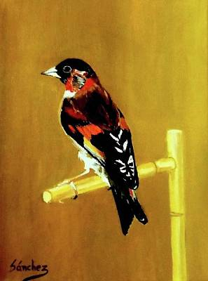 Painting - Spanish Gold Finch by Manuel Sanchez