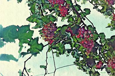 Grape Leaves Photograph - Spanish Grapes by Sarah Loft