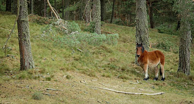 Photograph - Spanish Horse Gredos by Henri Irizarri