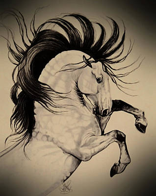 Drawing - Spanish Horses by Cheryl Poland