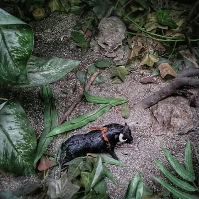 Bull Photograph - Spanish Jungle #bull #bullfighting by Rafa Rivas