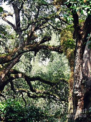 Photograph - Spanish Moss 1 by Sarah Loft