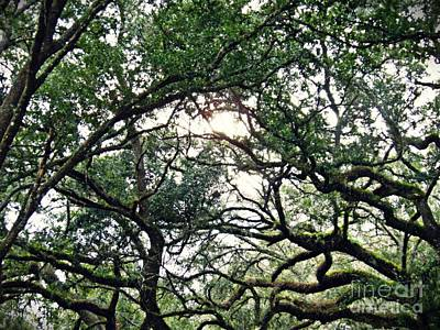 Photograph - Spanish Moss 2 by Sarah Loft