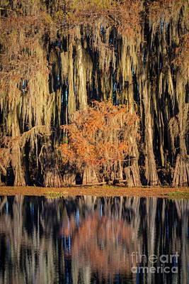 Caddo Lake Photograph - Spanish Moss At Caddo Lake by Inge Johnsson