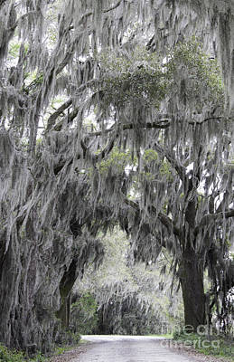 Photograph - Spanish Moss At Savannah National Wildlife Refuge by Jeannette Hunt