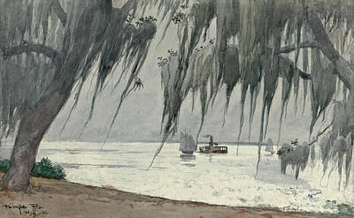 Winslow Homer Drawing - Spanish Moss At Tampa by Winslow Homer