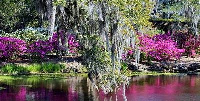 Photograph - Spanish Moss Beauty by Cynthia Guinn