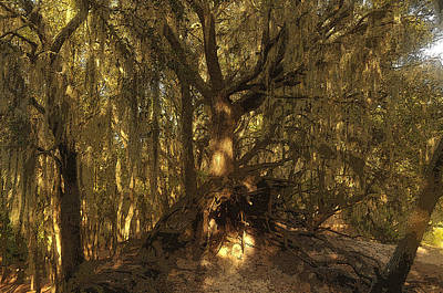Tree Roots Painting - Spanish Moss by David Lee Thompson