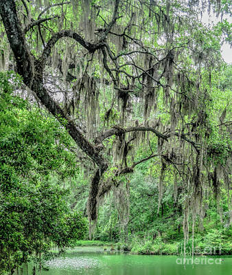 Photograph - Spanish Moss by Elvis Vaughn