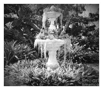 Photograph - Spanish Moss Fountain With Bromeliads - Black And White by Carol Groenen