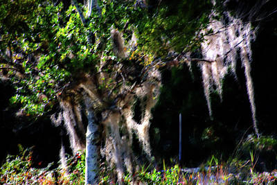 Photograph - Spanish Moss by Gina O'Brien