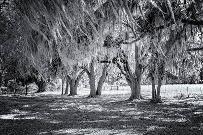 Photograph - Spanish Moss In Black And White by Tom Singleton