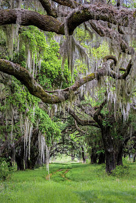Color Photograph - Spanish Moss In Georgia by Jon Glaser
