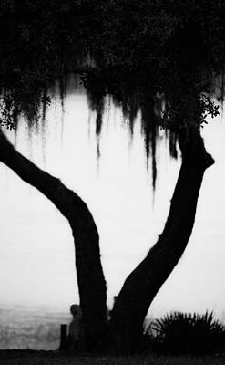 Spanish Moss In Silhouette Art Print by Shelby  Young