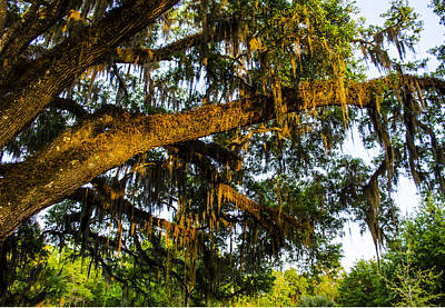 Photograph - Spanish Moss In The Gloaming by Deborah Smolinske