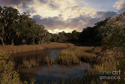 Photograph - Spanish Moss Marsh Sunset by Dale Powell