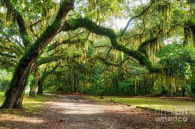 Photograph - Spanish Moss by Mel Steinhauer