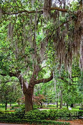 Photograph - Spanish Moss On Tree In Savannah7129vt by Doug Berry