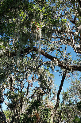 Photograph - Spanish Moss On Trees by Sally Weigand