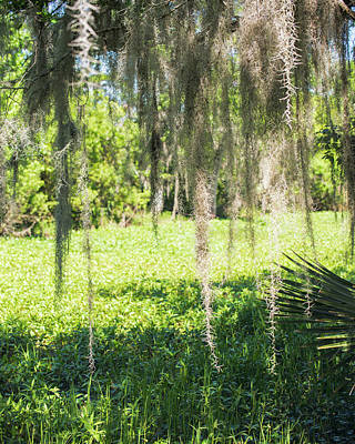 Photograph - Spanish Moss by Ray Devlin