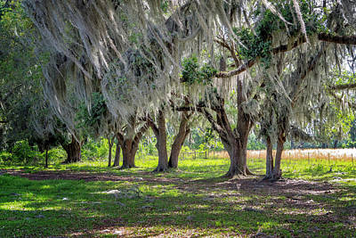 Photograph - Spanish Moss by Tom Singleton