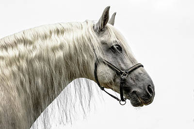 Photograph - Spanish Stallion by Wes and Dotty Weber
