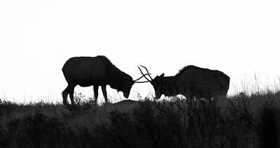 Photograph - Sparing Elk by Kari Andresen
